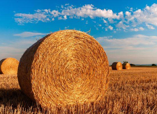 straw-bales-726976_fotor